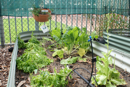 Sustainability - vegetable garden